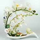 10.5 orquídeas