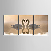 Lona Envuelta Para Galerias de arte del cisne de los amantes de los animales Juego de 3