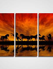 キャンバスセット / アンフレームキャンバスプリント 風景 / 静物画 / カジュアル リアリズム / Modern,3枚 キャンバス 横長 版画 壁の装飾 For ホームデコレーション