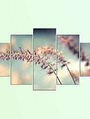 Strukket Lærred Print Blomstret/Botanisk Moderne,Fem Paneler Kanvas Alle Former Kunsttryk Vægdekor For Hjem Dekoration