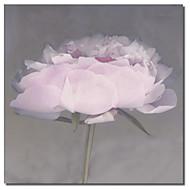 Painettu Canvas taide Kukat Pink Flower Erin Clark venytetty Frame