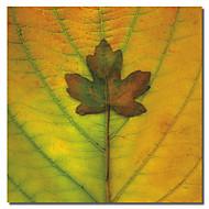 gedruckt Leinwand art floral Ahorn verlassen iii durch flowerphotos mit gestreckten Rahmen