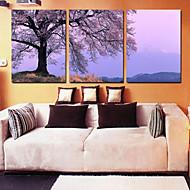 Stretched Canvas Art Landscape Big Tree Set of 3