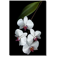 Stretched Canvas Art Floral Orchid Bloom