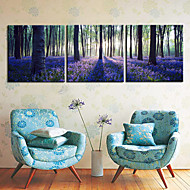Stretched Canvas Print Art Landscape Forest Set of 3