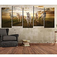 Stretched Canvas Art Animal En Pentium häst Set med 5