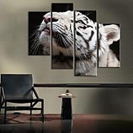 sträckt kanfas vit tiger dekoration uppsättning av 4