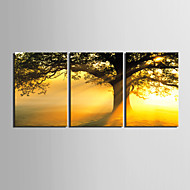 Stretched Canvas Print Art Botanical Golden Tree Set of 3