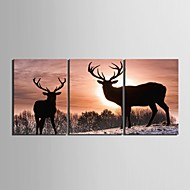 Stretched Canvas Art Deer Decorative Painting Set of 3