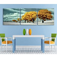E-HOME® Stretched Canvas Art The Yellow Tree Decoration Painting Set of 3