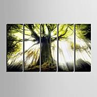 e-home® lona esticada arte da árvore set pintura decorativa de 5