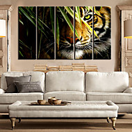 E-HOME® Stretched Canvas Art Landscape Animal king of Forest Decorative Painting Set of 5