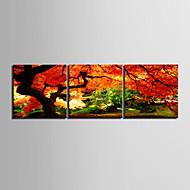 e-Home® opgespannen doek kunstlandschap diep in een bos decoratief schilderen set van 3