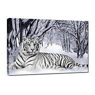 visuell star®tiger dyr lerret maleri kunst vinter snø strukket lerret utskrift