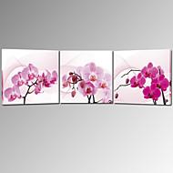 visivo star®stretched tela stampata tre pannelli di parete di arte pronta per essere appesa