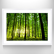 VISUAL STAR®Green forest Picture Print Photo Frame Natural Landscape Wall Art Ready to Hang