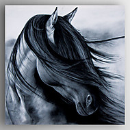Oil Painting Black Horses Head Hand Painted Canvas with Stretched Framed Ready to Hang