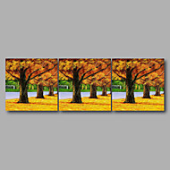 Ready to Hang Stretched Canvas Print Three Panels Wall Art Home Deco Autumn Trees Modern