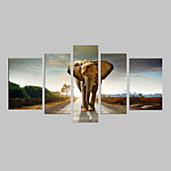 E-HOME® Stretched Canvas Art Walking On The Road of The Elephant Decorative Painting Set of 5