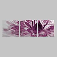 Stretched Canvas Print Art Floral Purple Burst Set of 3