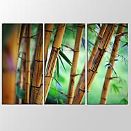 Canvas Set Abstraktit maisemakuvat Moderni,3 paneeli Kanvas Vaakasuora Tulosta Art Wall Decor For Kodinsisustus