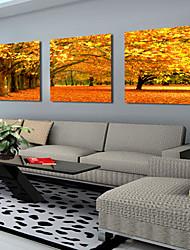 esticadas da lona de arte da paisagem maples outono conjunto de 3