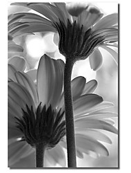 Stretched Canvas Art Floral Life