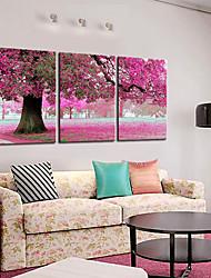 Stretched Canvas Art Botanical Spring Pink Tree Set of 3