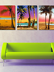 Stretched Canvas Art Landscape Coconut Tree on Beach Set of 3
