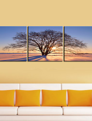 Reproduction transférée sur toile Art botanique Lonely Tree in the Morning Set de 3