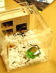 Plâtre acrylique nids mélangés pour fourmis