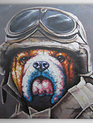Hand Painted Oil Painting Animal Mr. Pilot