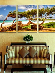 Stretched Canvas Art The Wind in The Trees Set of 3