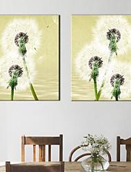 Stretched Canvas Art Flower Dandelion Set of 2