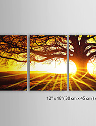 "Customized Canvas Print Landscape Set Tree in Sunset Trilogy 12"" x 18""x 3pcs(30 x 46 cm x 3pcs) Gallery Wrapped"