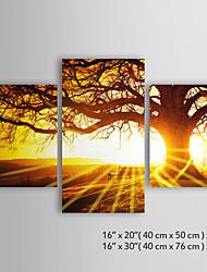 personnalisé arbre de paysage toile d'impression dans le coucher du soleil la galerie de 40 x 50 cm x 2pcs + 40 x 76 cm x enveloppé