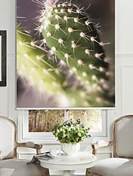 Botanic Style Cactus Roller Shade