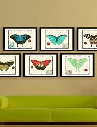 der Schmetterling dekorativ gerahmtes Leinwanddrucksatz von 6