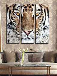Personalized Canvas Print Stretched Canvas Art Tiger 24x70cm  30x90cm  33x100cm  Gallery Wrapped Art Set of 3