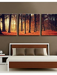 Personalized Canvas Print Twilight Woods 30x30cm  40x40cm  60x60cm  Gallery Wrapped Art Set of 3