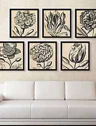 Sketch Flower  Framed Canvas Print Set of  6