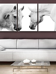E-HOME® Stretched Canvas Art The Running Horse Decoration Painting Set of 3