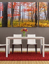 Personalized E-HOME® Canvas Print The Maple Woods  60x60cm 30x60cm Framed Canvas Painting Set of 3