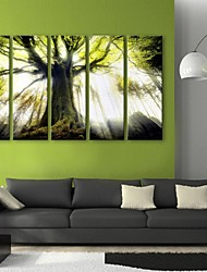 E-HOME® Stretched Canvas Art The Tree Decorative Painting  Set of 5