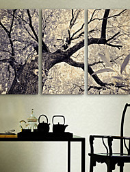 E-HOME® Stretched Canvas Art The Tree Decoration Painting  Set of 3