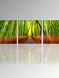 VISUAL STAR®Bamboo Forest Canvas Wall Art/Wall Picture with Frame/3 Panel Painting Art Ready to Hang