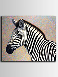 Zebra Art Photography Decoration Painting ,  One Panel Ready to Hang