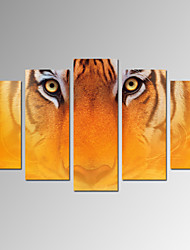 VISUAL STAR®Tiger Photo Print Animal Stretched Canvas Print with Framed Ready to Hang