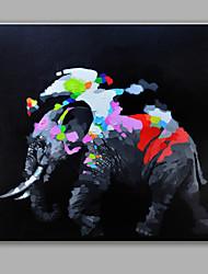 Peint à la main Animal Carré,Moderne Un Panneau Toile Peinture à l'huile Hang-peint For Décoration d'intérieur
