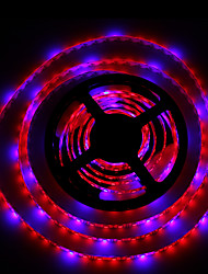 36W Lampes Horticoles LED 300 SMD 5050 lm Rouge / Bleu Etanches DC 12 V 2 pièces